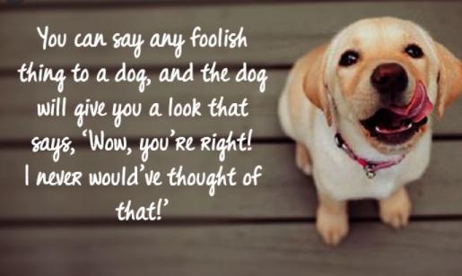 Unconditional Love Pets Quotes