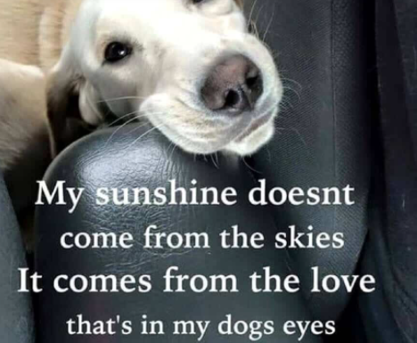 Unconditional Love Quotes About Dogs